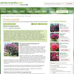 Planter le Lagerstroemia