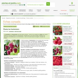 Planter et cultiver les framboisiers