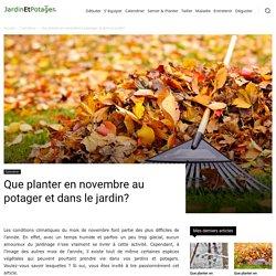 Que planter en novembre au potager et dans le jardin?