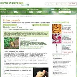 Planter et conserver ses pommes de terre
