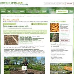 Planter les pommes de terre sous paillis