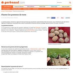 Planter la pomme de terre