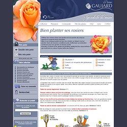 Bien planter ses rosiers - Conseils pour obtenir de belles roses