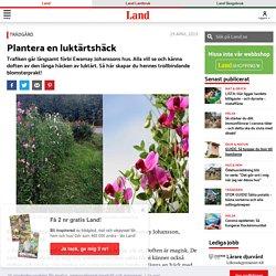 Plantera en luktärtshäck – guide