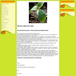 Kalender plantering trädgårdsväxter