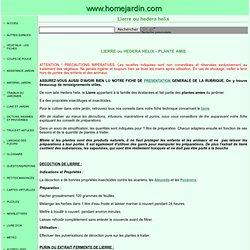 PLANTES AMIES - LIERRE ou HEDERA HELIX
