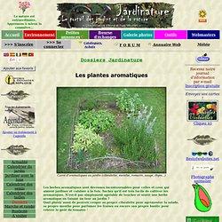 Les plantes aromatiques ou herbes aromatiques, une culture facile pour une cuisine saine !