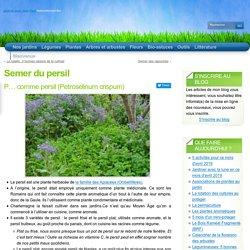 Semer du persil « Persil « Plantes Aromatiques « Plantes