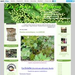 Plantes aromatiques : la LIVÈCHE
