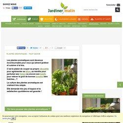 Plantes aromatiques : tout savoir