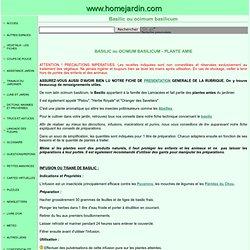 PLANTES AMIES - BASILIC ou OCIMUM BASILICUM
