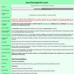 PLANTES AMIES - CAMOMILLE ou MATRICARIA