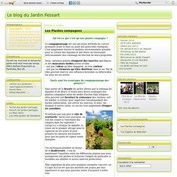 Les Plantes compagnes - Le blog du Jardin Fessart