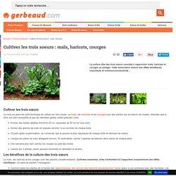 Plantes compagnes : maïs, haricots, courges