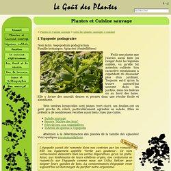 Le Goût des Plantes