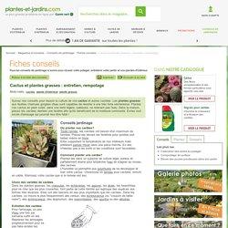 Cactus et plantes grasses : entretien, rempotage