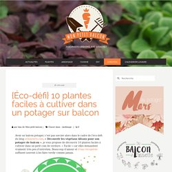 {Éco-défi} 10 plantes faciles à cultiver dans un potager sur balcon - Mon Petit Balcon