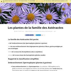 Les plantes de la famille des Astéracées