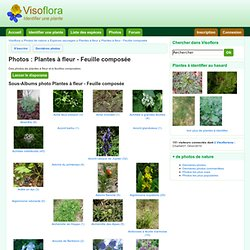 Photos Plantes à fleur - Feuille composée