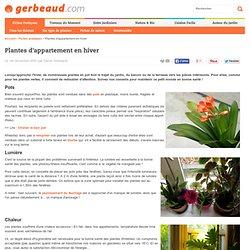 Plantes d'intérieur : soins et conseils