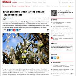 Trois plantes pour lutter contre l'hypertension - Santé