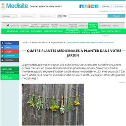 Quatre plantes médicinales à planter dans votre jardin