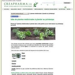 7 plantes médicinales à planter au printemps - Idée de plantes pour le printemps