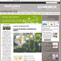 Plantes du moment : L'Aurey Des Jardins