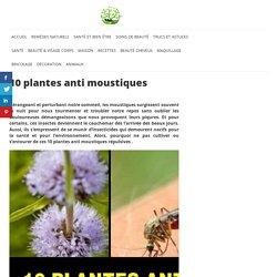 10 plantes anti moustiques – Astuces Naturelles
