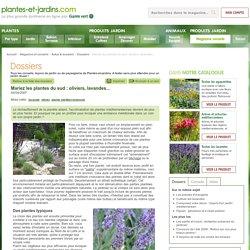Mariez les plantes du sud : oliviers, lavandes...