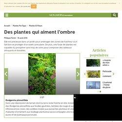 Plantes qui peuvent pousser à l'ombre
