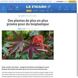 Des plantes de plus en plus prisées pour du bioplastique