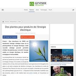 Des plantes pour produire de l'énergie électrique
