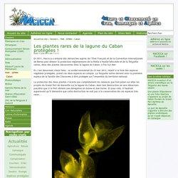 Les plantes rares de la lagune du Caban protégées ! - [Nacicca]