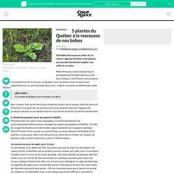 5 plantes du Québec à la rescousse de nos bobos