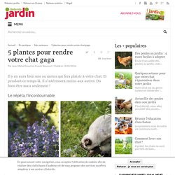 5 plantes pour rendre votre chat gaga - Détente Jardin