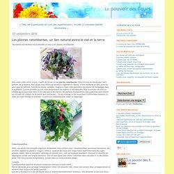 Les plantes retombantes, un lien naturel entre le ciel et la terre