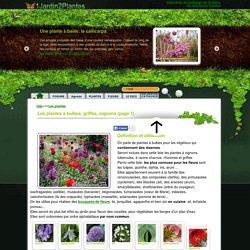 128 plantes à bulbes, rhizomes, oignons, griffes
