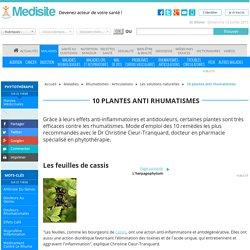 10 plantes anti rhumatismes