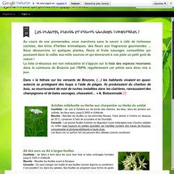 Les plantes, fleurs et fruits sauvages comestibles !
