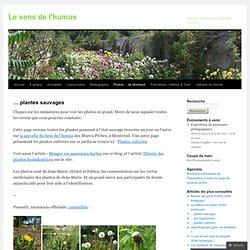… plantes sauvages « Le sens de l'humus