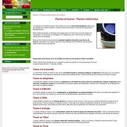 Plantes et tisanes : Plantes médicinales