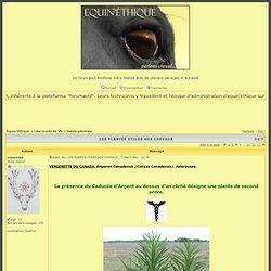 LES PLANTES UTILES AUX CHEVAUX - Page 3