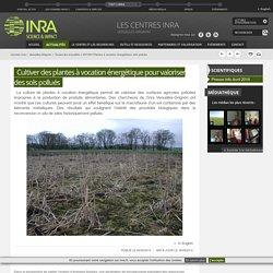 INRA 06/05/14 Cultiver des plantes à vocation énergétique pour valoriser des sols pollués