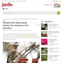 Haies pour attirer les oiseaux et insectes