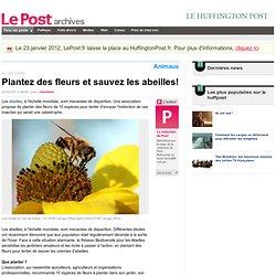 Plantez des fleurs et sauvez les abeilles! - LePost.fr (09:46)