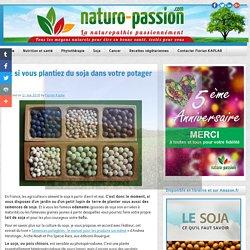 Et si vous plantiez du soja dans votre potager ? - Naturo-Passion.com