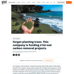 Forget planting trees. This company is funding 4 far-out carbon removal projects.