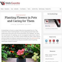 Planting Flowers in Pots and Caring for Them