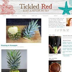 Planting A Pineapple — Tickled Red